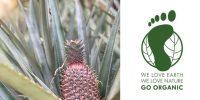 coco_ananas