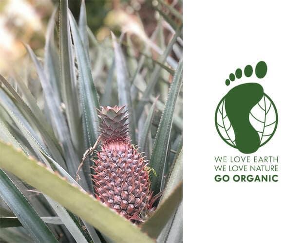 Coconutoil Cosmetics - 100% bio kozmetikum webshop