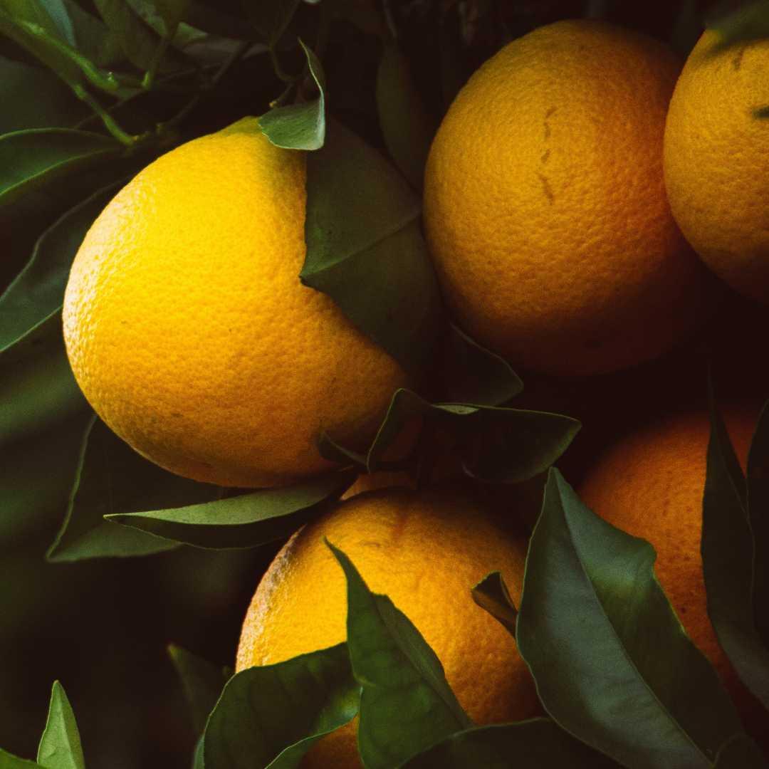 Édesnarancs illóolaj Az édeskés illatú édesnarancs illóolajat a Kínában őshonos, örökzöld édesnarancsfa gyümölcsének külső héjából nyerik. Fő hatóanyaga a legalább 80-90%-ban jelenlévő limonén. Jellegzetes összetevője a friss, citromos illatú illatszereknek. Egyensúlyt teremt túl száraz vagy túl zsíros bőr esetén. Javítja a testfelszín vérellátását, ezért a cellulitisz kezelésében is használatos. Növeli az izzadást, így serkenti a mérgező anyagok eltávolítását. Emellett bőrnyugtató, gyulladásgátló, tisztító és általános fertőtlenítő hatása teszi értékessé a kozmetikában.